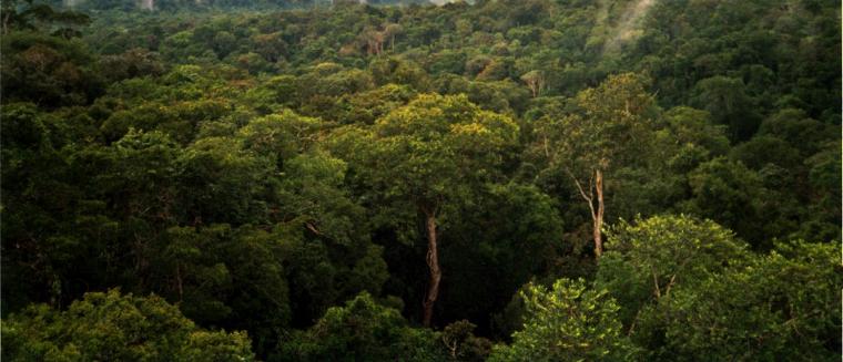 Amazon_Manaus_forest760